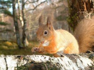 squirrel-supper